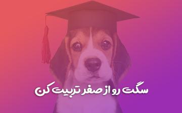 آموزش فرمان پذیری مقدماتی سگ | آموزش تربیت سگ مقدماتی
