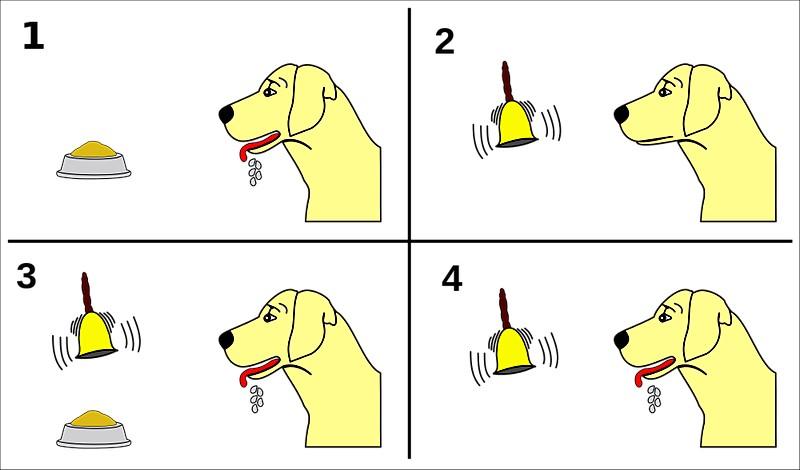 شرطی سازی سگ