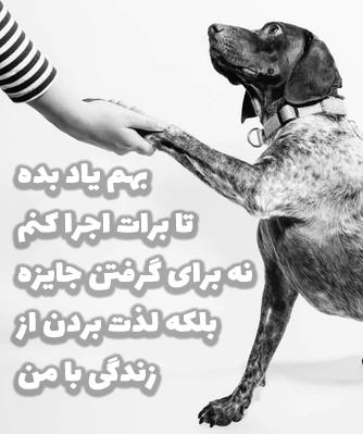 عکس تربیت سگ