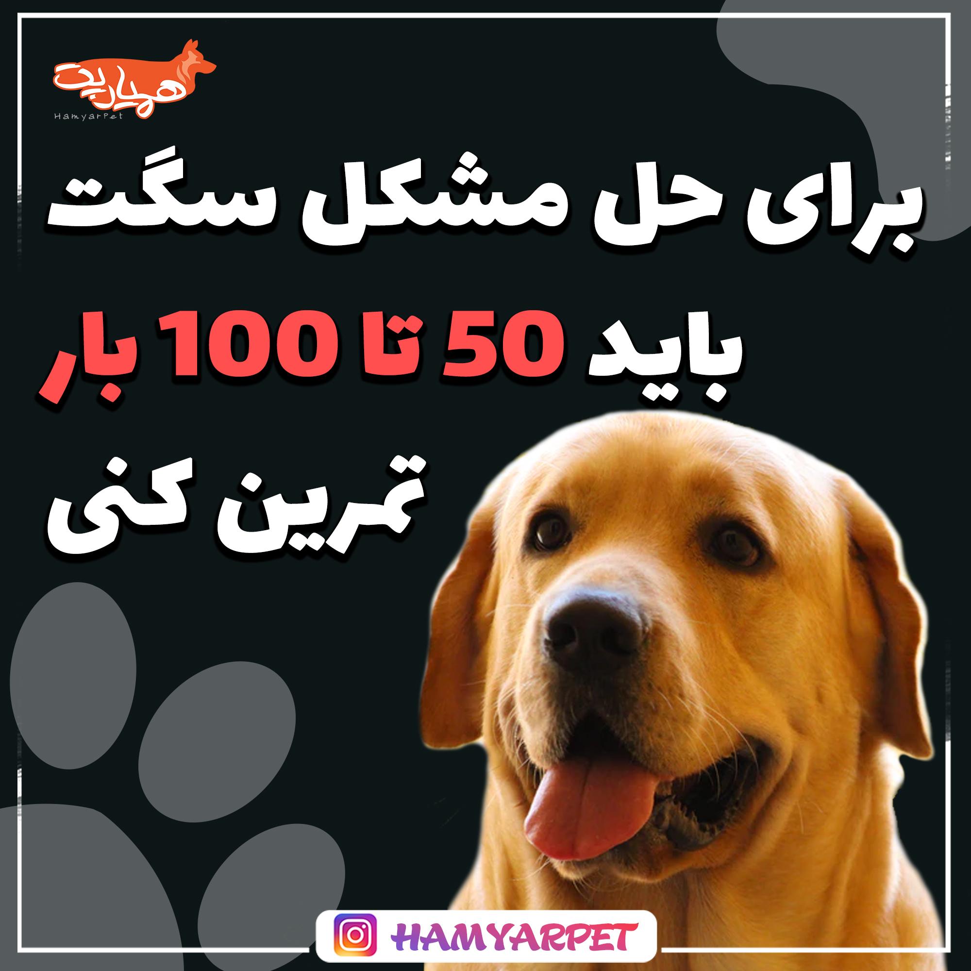 تمرینات آموزشی به سگ